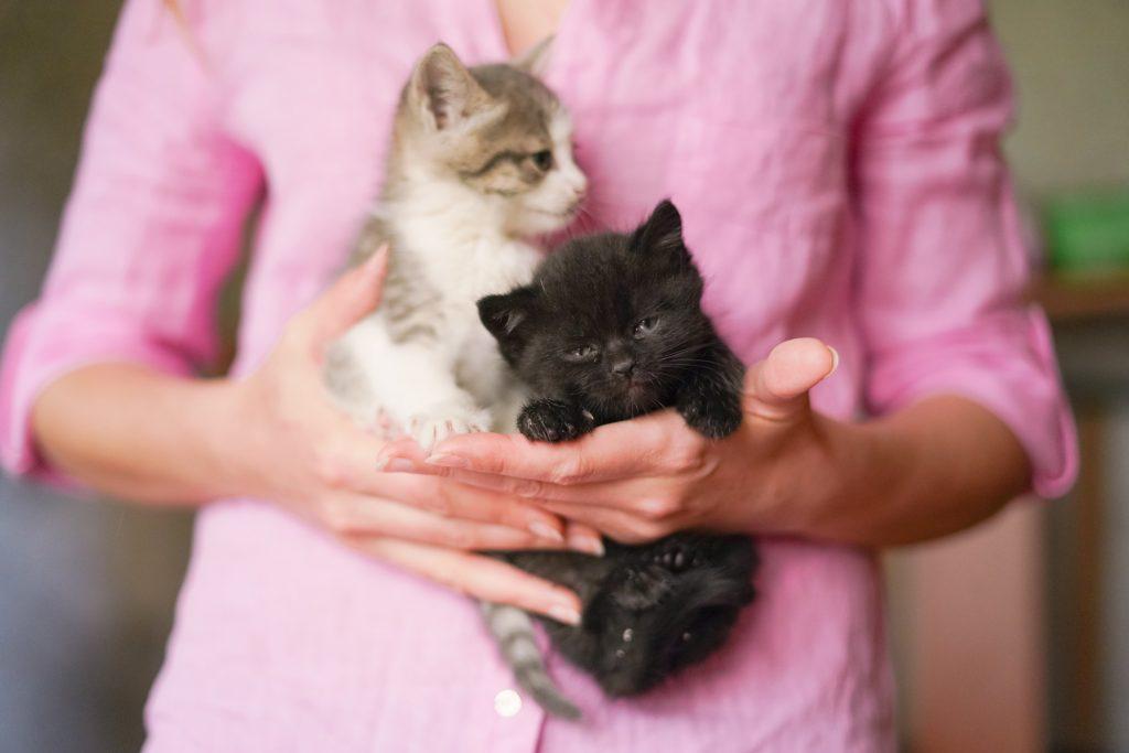 Фото Дафна та її малюки