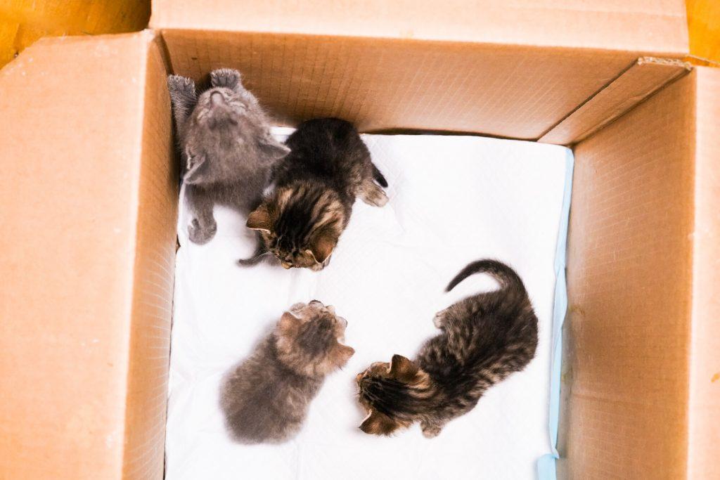 Фото Діана та її малюки