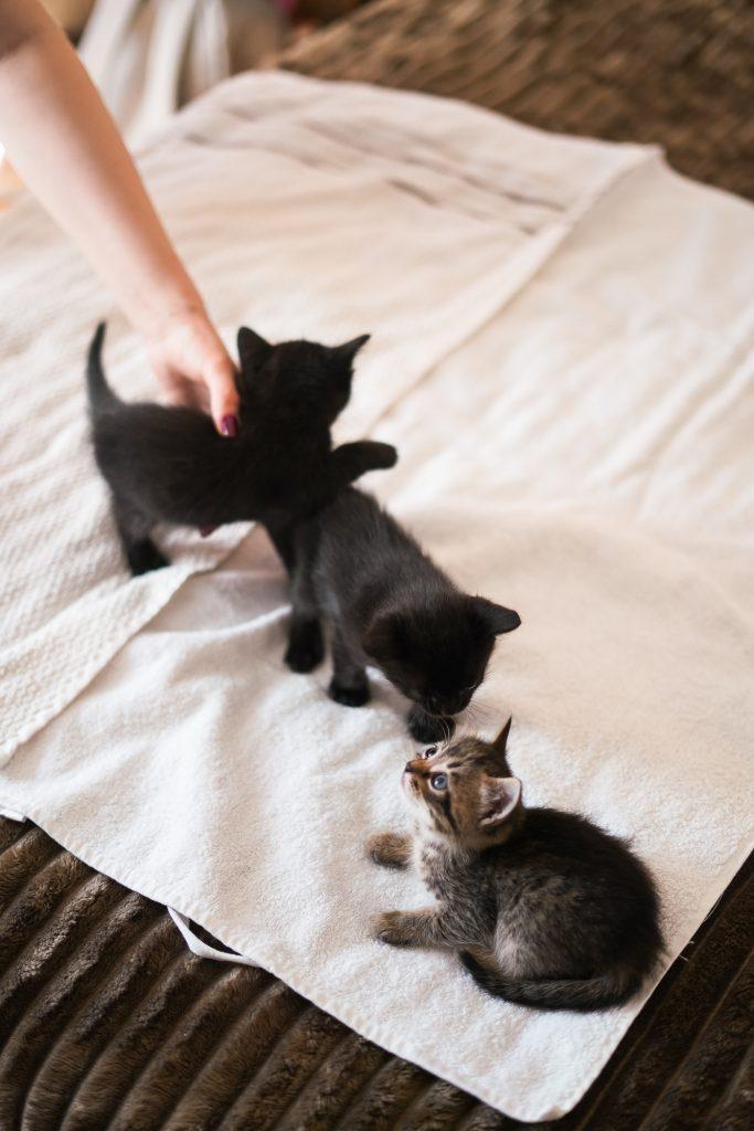 Фото Кларісса та її малюки